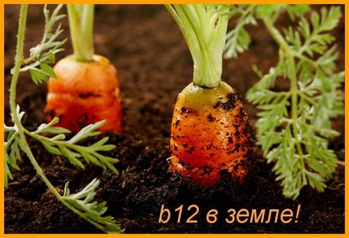 витамин b12 в земле, в моркови