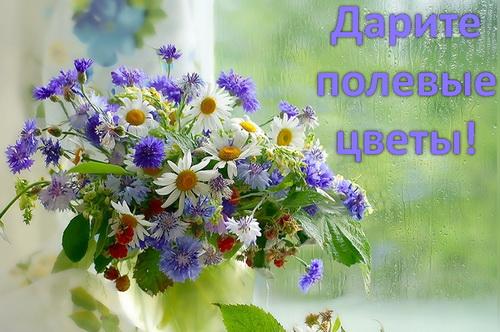 дарите полевые цветы