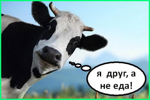 животные - наши друзья, а не еда