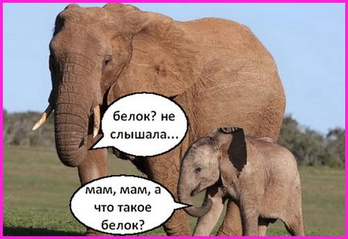слониха и слоненок - животные веганы